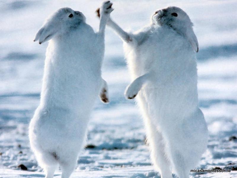 Arctic Animals - activities | preschool Dublin 15 ...
