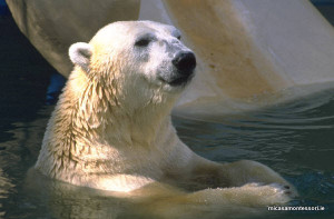 arctic_animals_micasa_montessori-05