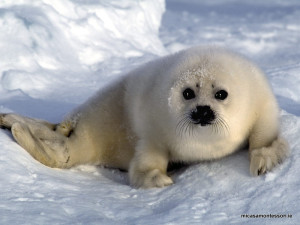 arctic_animals_micasa_montessori-06