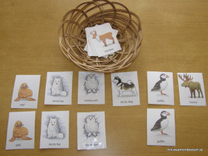 arctic_animals_micasa_montessori-14