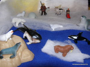 arctic_animals_micasa_montessori-16