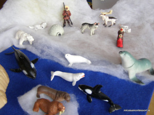 arctic_animals_micasa_montessori-17