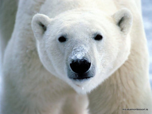 arctic_animals_micasa_montessori-18