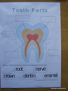 dental-care-micasa-montessori-blanchardstown-17