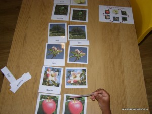 micasa_montessori_apple_theme_P9198422