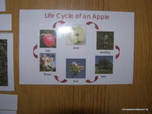 micasa_montessori_apple_theme_P9198426