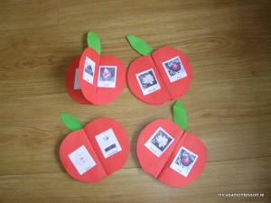 micasa_montessori_apple_theme_P9308573