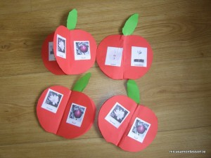 micasa_montessori_apple_theme_P9308574