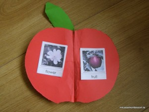 micasa_montessori_apple_theme_P9308576