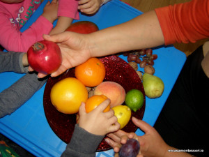 micasa_montessori_fruit&veg_theme13
