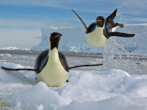 pinguin-theme-photos-1