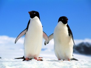 pinguin-theme-photos-3