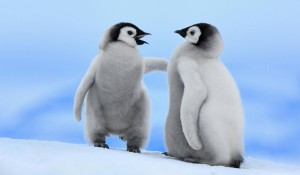 pinguin-theme-photos-4