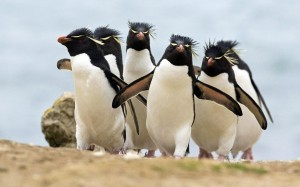 pinguin-theme-photos-5