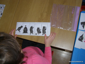 pinguins-activities-micasa-montessori-13