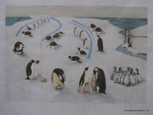 pinguins-theme-micasa-montessori-07