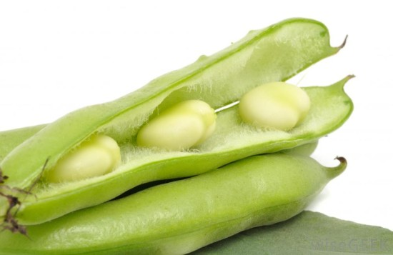 bean-micasa-montessori-10
