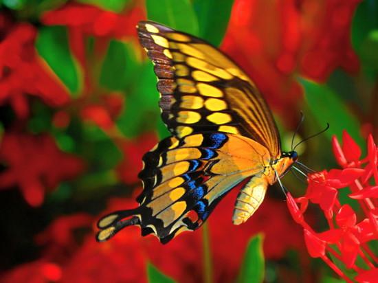 butterfly-micasa-montessori-01