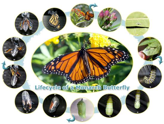 butterfly-micasa-montessori-02