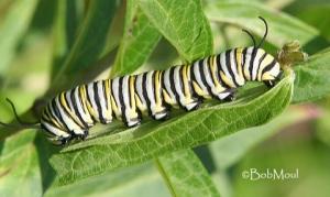 butterfly-micasa-montessori-03