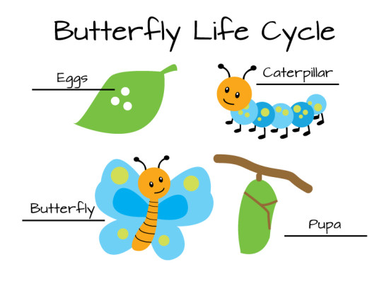 butterfly-micasa-montessori-07