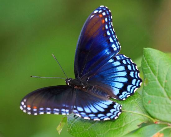 butterfly-micasa-montessori-08