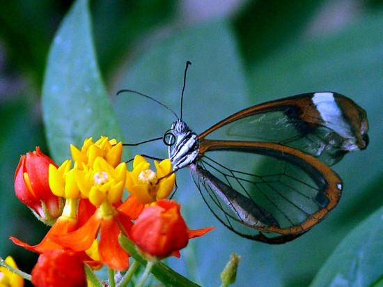 butterfly-micasa-montessori-09