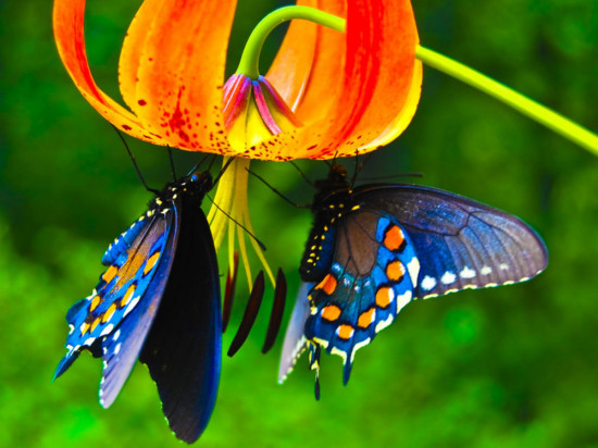 butterfly-micasa-montessori-11