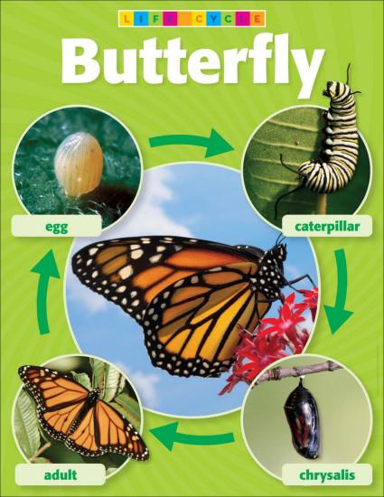 butterfly-micasa-montessori-12