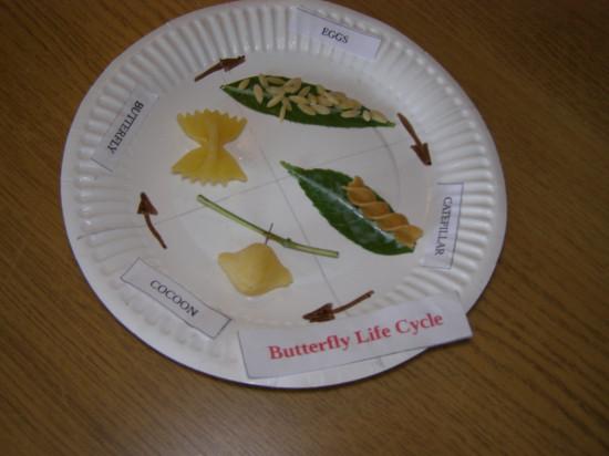 butterfly-micasa-montessori-13