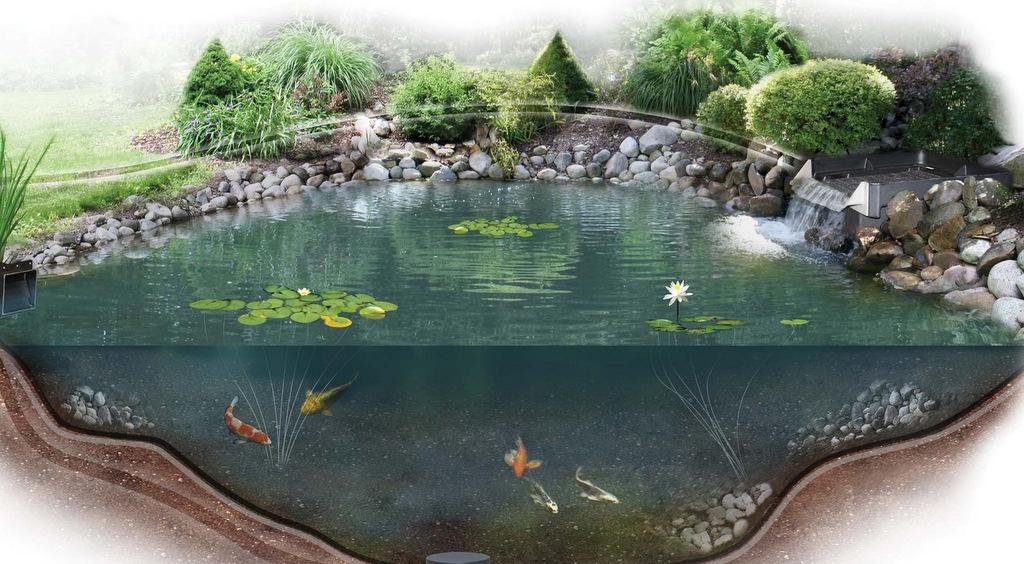 Пруд для разведения рыбы своими руками на участке и